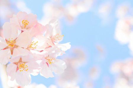 桜が待ち遠しいですね!